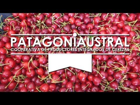 CEREZAS DE EXPORTACIÓN - vistamos la Cooperativa Patagonia Austral en Gaiman