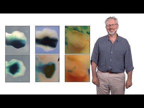 Wie kann die Samen auf die Gelenke