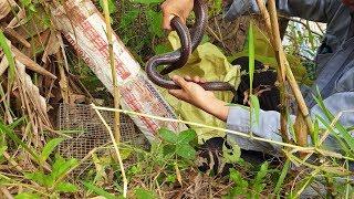 Kỹ thuật bắn ná. Hạ cò khi đang bay giữa sông cái và vợ chồng rắn khu vực chó  | Săn bắt SÓC TRĂNG |