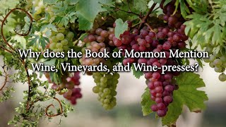 Why does the Book of Mormon Mention Wine Vineyards and Wine presses?