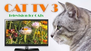 Cat TV 3 - (Television for Cats)