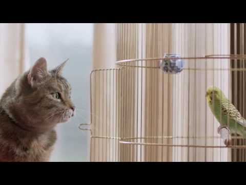Freeview - The Cat & Budgie