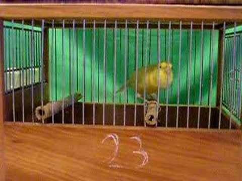 immagine di anteprima del video: MALINOIS WATERSLAGER 2006