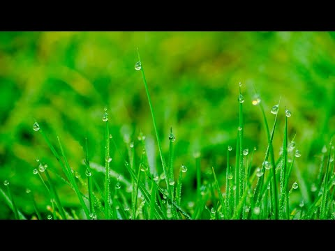 Rain Nature Relaxing Sounds (1Hour Non Stop) - Sleep Music, Stress Relief, Gentle Rain, Meditation