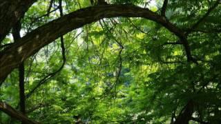 relaxační hudba příroda,zvuky přírody,relaxační hudba zvuky lesa,relaxační hudba na spaní příroda