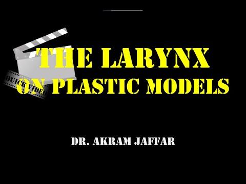 Krtań omówiona na plastikowym modelu