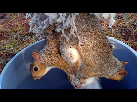 When This Guy Investigated Some Distressing Squeals, He Found Three Creatures In A Sticky Situation