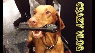Crazy Vlog #11 Dog with Dildo | Собака с Фаллоимитатором