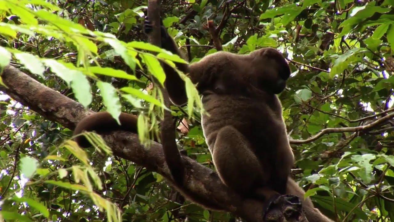 Ecuador: Regenwald (1:53)