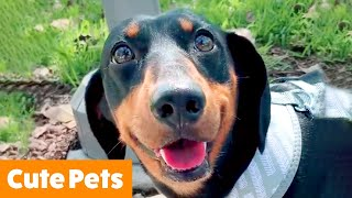 Cute and Silly Animals | Funny Pet Videos