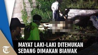 Mayat Laki-Laki Ditemukan ketika Sedang Dimakan Biawak Berlokasi di Gunung Putri