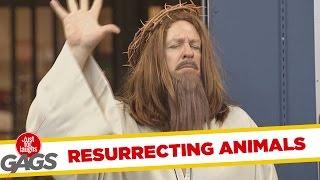 Jesus Brings Animals to Life