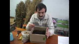 """Разведение червя """"Старатель"""". Изготовление биогумуса."""