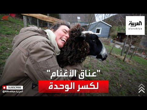 العرب اليوم - شاهد: مزرعة ألمانية تطالب بمعانقة الأغنام