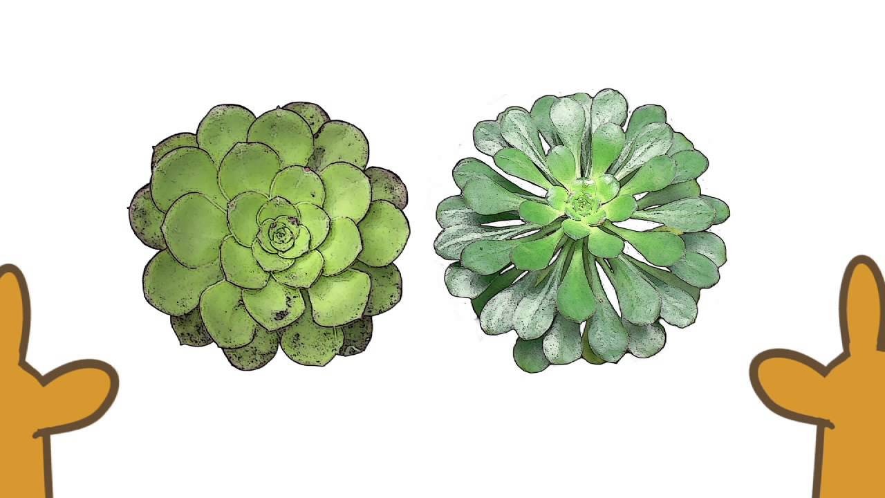 Flora Canaria