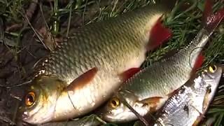 Рыбная ловля ночью на антибах