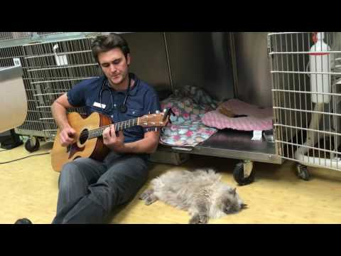 Anteprima Video Veterinario canta per i suoi animali prima di operarli