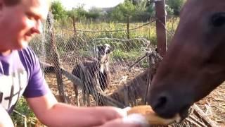 Лошадь украла батон для бутербродов. Кормим лошадь батоном.
