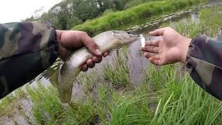 Малые реки тверской области рыбалка
