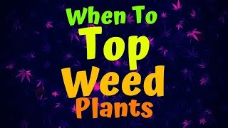 When To Top Weed Plants