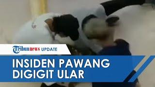 Detik-detik Insiden Berdarah Pawang Digigit Ular saat Pameran di Mal, Korban Terkapar Jadi Tontonan