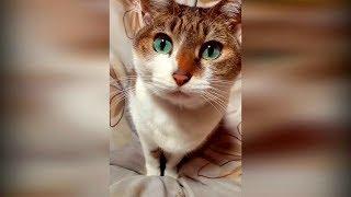Самые новые приколы с животными 2019 январь #12 Смешные видео про котов и собак до слез в мире