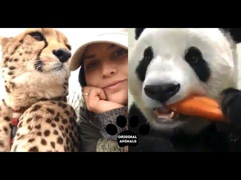 Original Animals #4. CUTE AND FUNNY ANIMALS VIDEO/ МИЛЫЕ И СМЕШНЫЕ ЖИВОТНЫЕ.