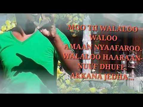 Download Neew walaloo aman nyaafaro haaraa. 2018. HD Mp4 3GP Video and MP3