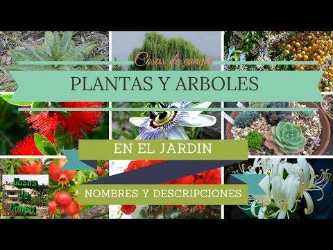 Plantas y arboles de jardín con nombres.