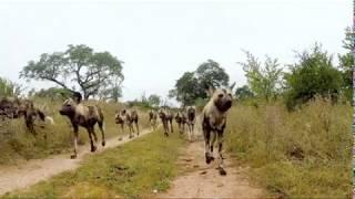 Unbelievable Wildlife in Africa Captured by Hidden Camera
