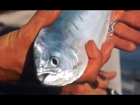 La pesca quello che è lm in