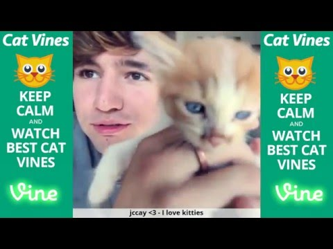 Ultimate Cat Vines Compilation #1 - February 2016