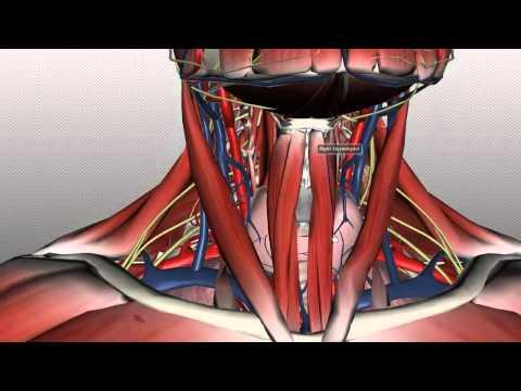 Asthma oder Osteochondrose