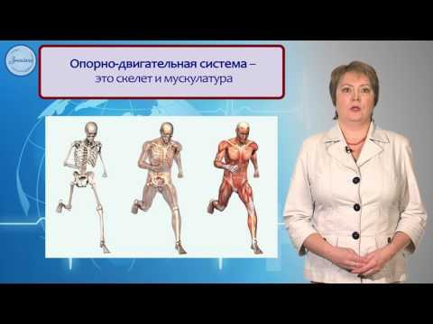 Системы органов в организме. Уровни организации организма
