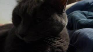 Lambert Kitties in Bed
