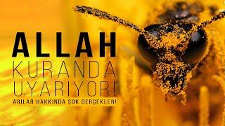 ALLAH Kuran'daki Ayet İle İnsanları Uyarıyor! Arılar Yok olursa Neler olur! Kıyamet alametleri.