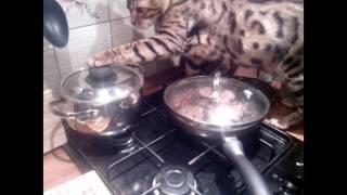 Кот открывает кастрюлю