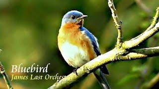 ❤♫ James Last Orchestra - Bluebird(藍知更鳥)