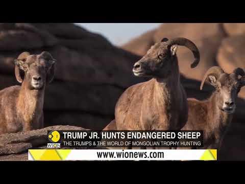 , title : 'Junior Trump hunts endangered sheep in Mongolia
