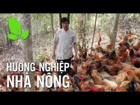 Hướng dẫn ký thuật chăn nuôi gà thả vườn
