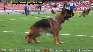 SV BSZS NÜRNBERG 2015-GHKL Rüden VA1 Ballack