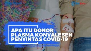 Apa Itu Donor Darah Konvalesen? Disebut Jadi Salah Satu Cara Sembuhkan Pasien Terinfeksi Covid-19
