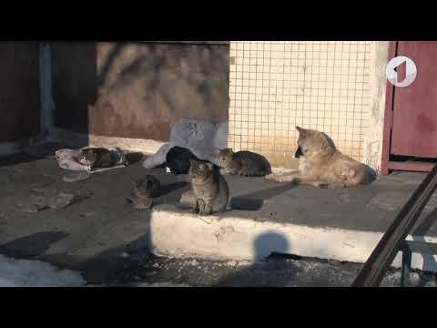 За жестокое обращение с животными – тюремный срок