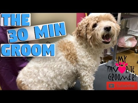 Grooming A Dog In 30 Minutes