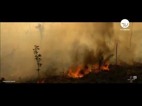 Câmara amplia debate sobre preservação da Amazônia - 06/09/19