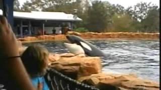 Fantástico:A Baleia Que Matou A Treinadora + Reportagem Da Mulher Que Vive Com Animais Selvagens
