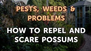 How to Repel and Scare Possums