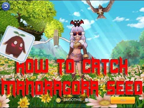Ragnarok Mobile(How to catch mandragon pet +10crit)(Super