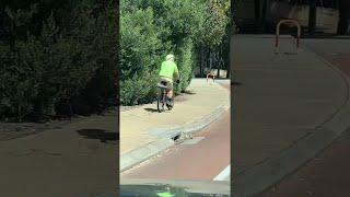 faze tari pasarea ataca un biciclist