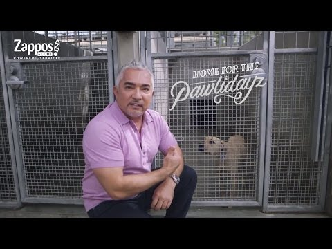 Cesar Millan: How To Pick The Best Shelter Pet For You | Zappos.com